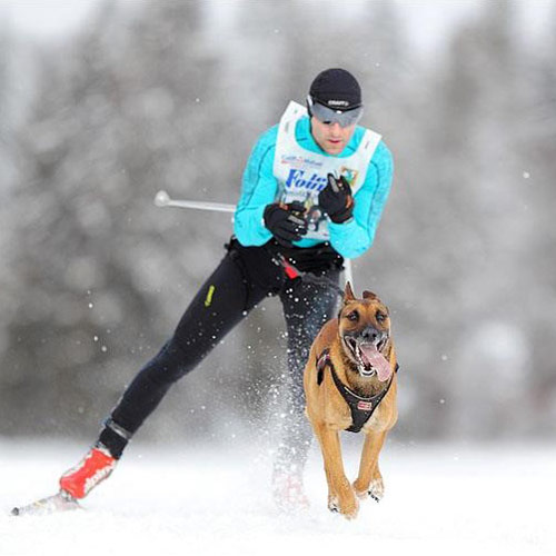 running avec son chien